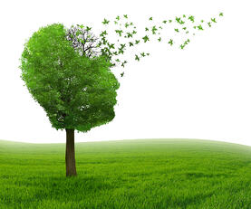 Brain disease with memory loss due to Dementia and Alzheimers illness as medical icon of a tree shaped as human head and brain losing leaves as concept of intelligence decline.-1