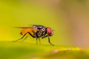 bigstock-Blow-Fly-Carrion-Fly-Bluebot-237947386