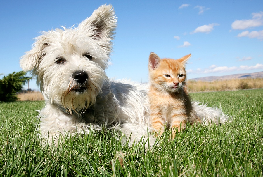 Live free with Pet Allergies. We make custom formulas so you can play with your buddies. Second Nature Care.