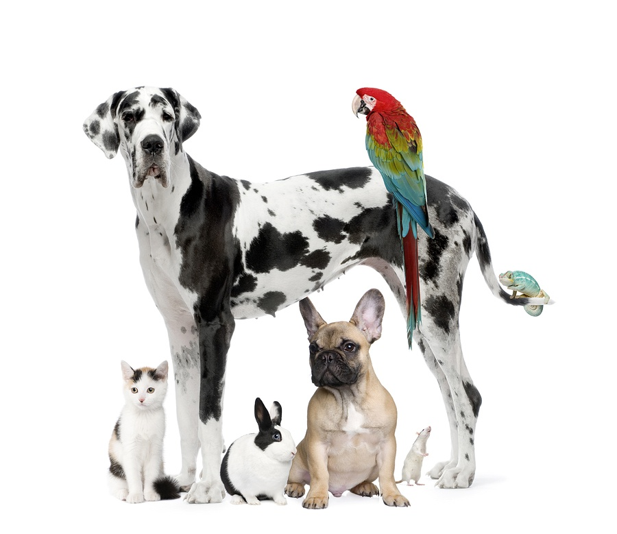 Live free from Pet Allergies and all other allergies. We make custom allersode densensitization formulas. Second Nature Care.