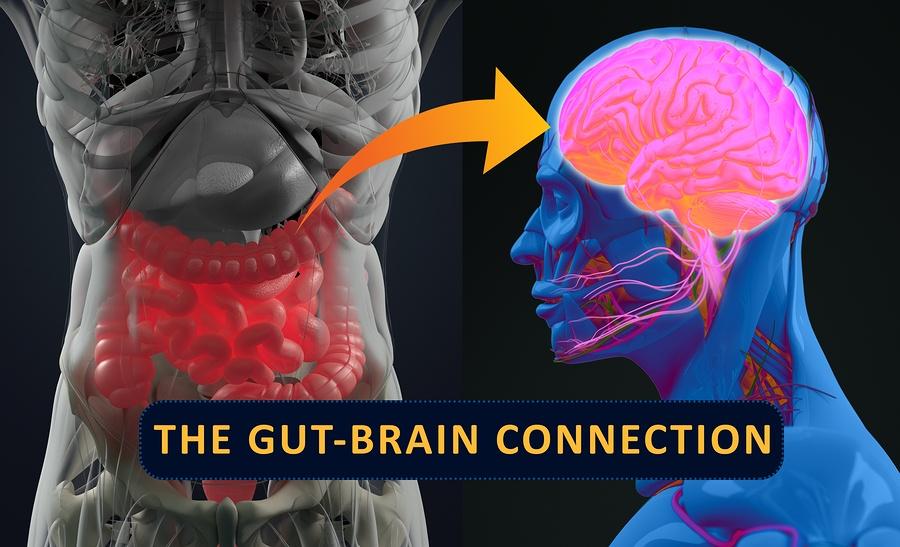 bigstock-Gut-brain-Connection-Or-Gut-Br-187210867