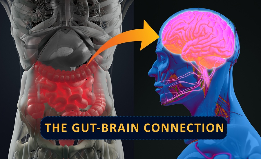 bigstock-Gut-brain-Connection-Or-Gut-Br-187210867