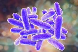 bigstock-Legionella-Pneumophila-Bacteri-231725494