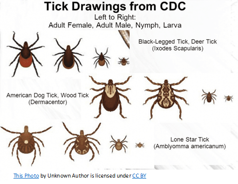 tick drawings from the CDC-2