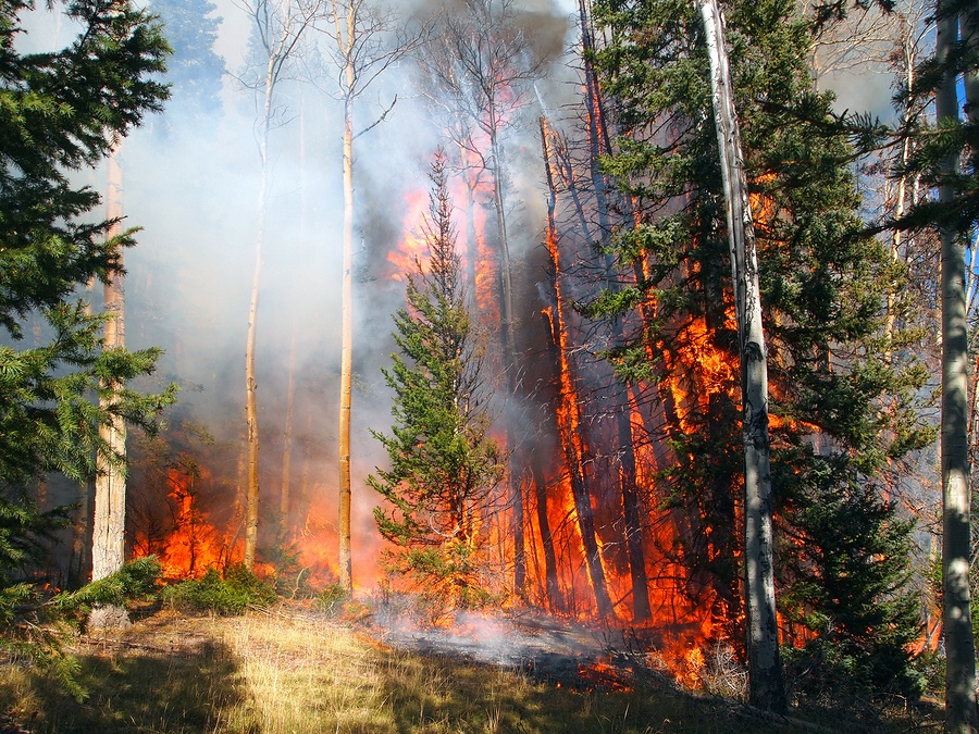 Wildfire pollution triggers cardiovascular events. Second Nature Care Environmental Detoxification and Ozone Therapies.